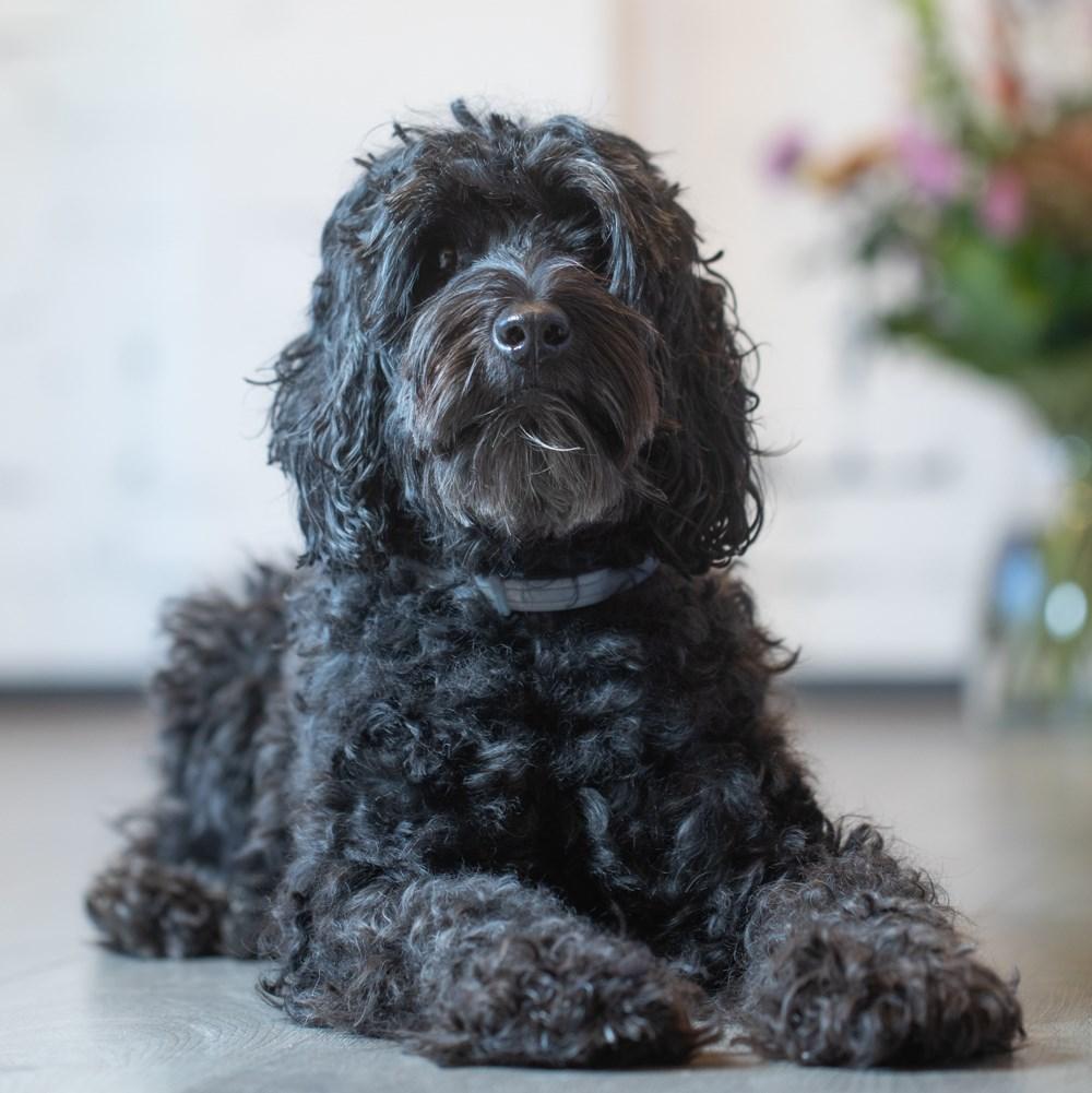 Foto van Bo de Huis & Hypotheek-hond